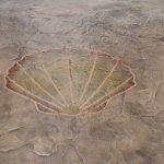 Seashell Design